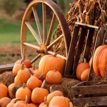 Тыква — главный сезонный овощ осени