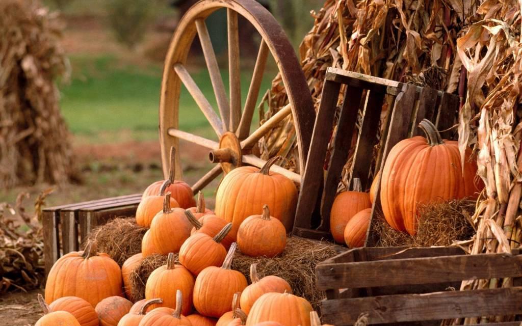 Pumpkin Wallpapers  Full HD wallpaper search