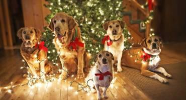 Что приготовить в наступающий год Жёлтой Собаки?
